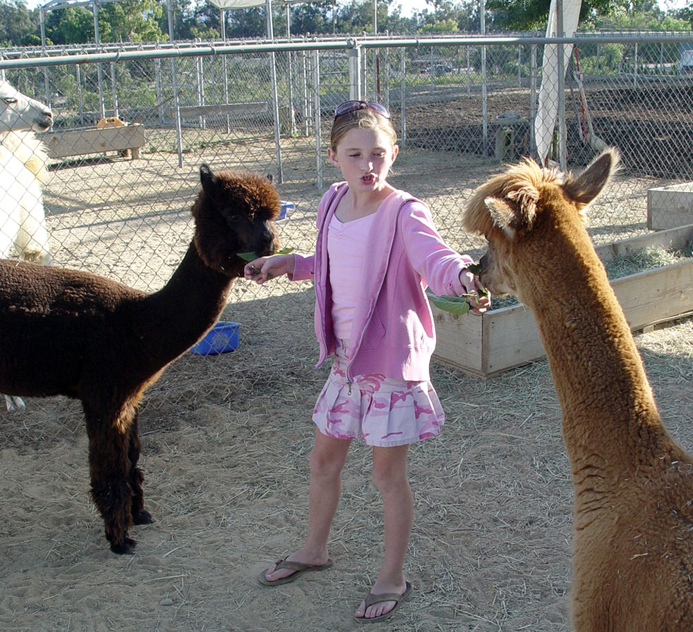Sammy and Alpacas